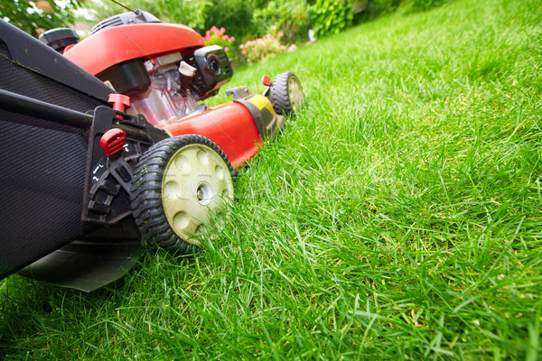 Lawn mower. Stock photo © Kurhan
