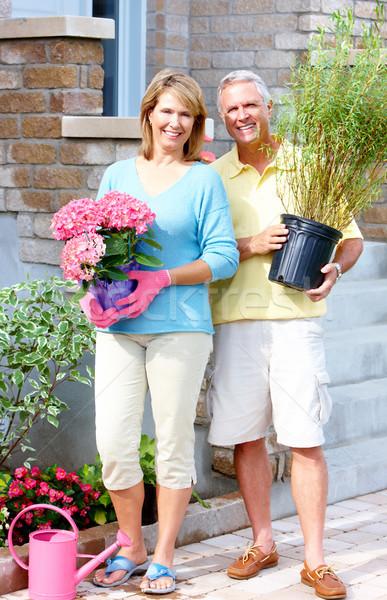 Ogrodnictwo para szczęśliwy starszy para ogród kwiat Zdjęcia stock © Kurhan