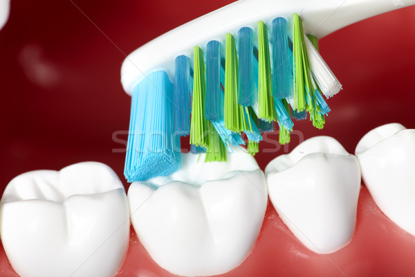 Dents saine humaine dents brosse dentisterie Photo stock © Kurhan