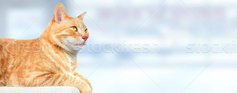 красный имбирь кошки синий животного ухода Сток-фото © Kurhan