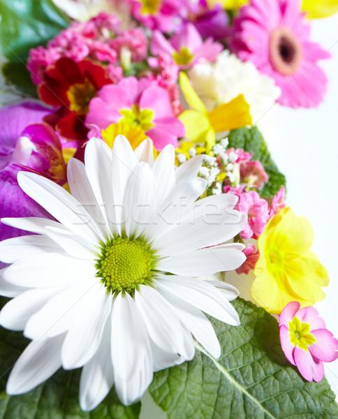 Floral cartão belo flores flor jardim Foto stock © Kurhan
