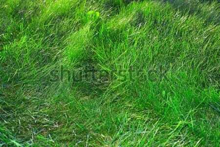 Untitled Stock photo © Kurhan
