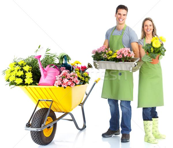 Jardinería personas trabajadores flores aislado blanco Foto stock © Kurhan