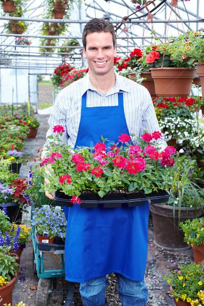 Jardineiro jovem sorridente trabalhando estufa flores Foto stock © Kurhan