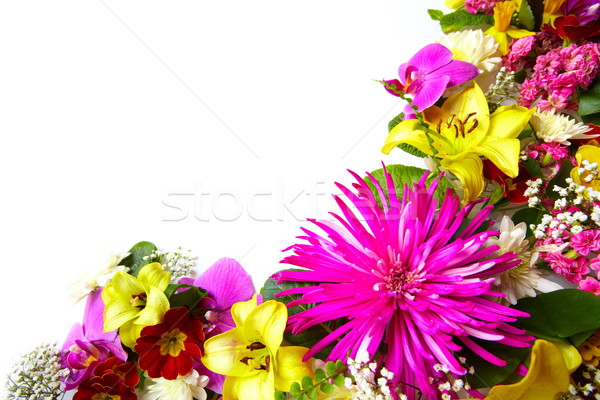 Floral tarjeta de felicitación hermosa flores aislado blanco Foto stock © Kurhan