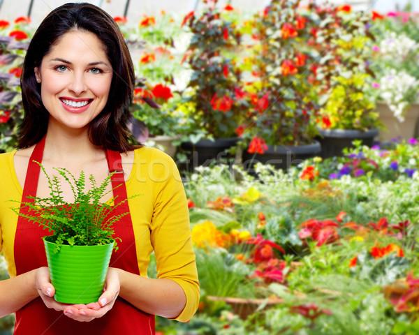 Gardening woman with plant. Stock photo © Kurhan