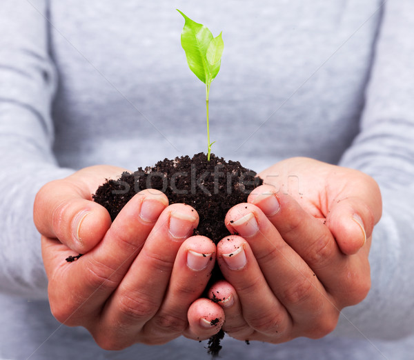Woman hands with green plant. Stock photo © Kurhan