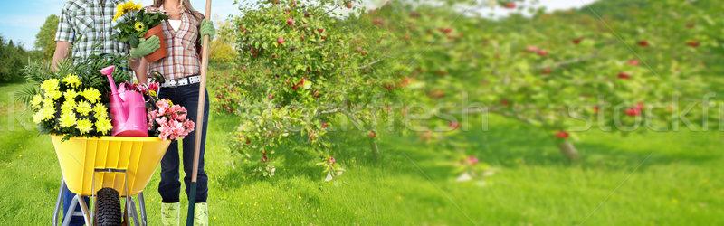 Ogrodnictwo para lata ogród kwiaty Zdjęcia stock © Kurhan