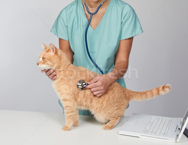 Veterinario medico cat veterinaria clinica medico Foto d'archivio © Kurhan