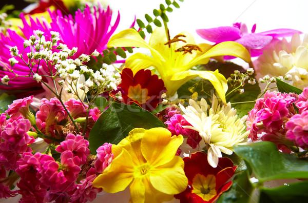 Floral tarjeta de felicitación hermosa flores flor jardín Foto stock © Kurhan