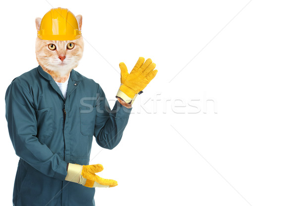 Ginger cat worker. Stock photo © Kurhan