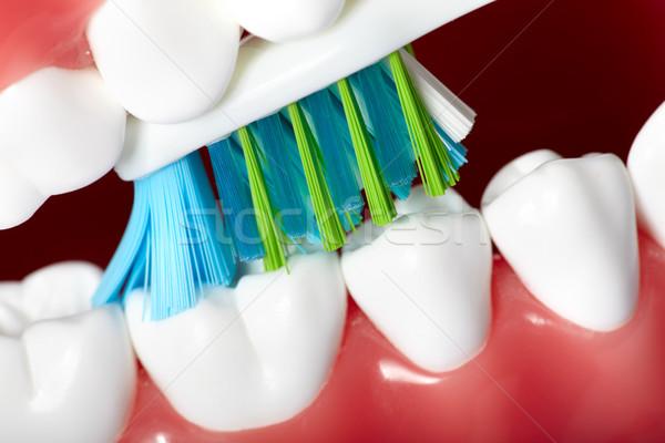 Stock foto: Zähne · gesunden · menschlichen · Zahn · Pinsel · Zahnmedizin