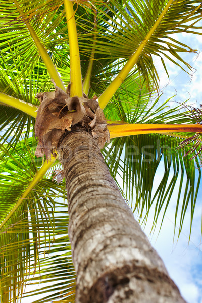 Tropische palm groene exotisch vakantie strand Stockfoto © Kurhan