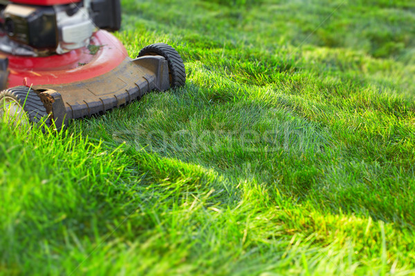 Herbe verte travaux jardin printemps Photo stock © Kurhan