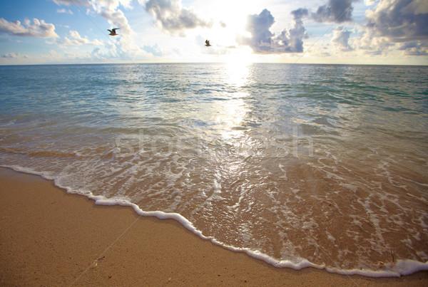 Miami strand natuur zee zomer zand Stockfoto © Kurhan