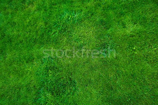 Green lawn. Stock photo © Kurhan