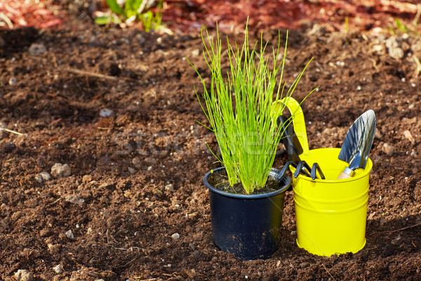 Chive and  gardening tools in the garden. Stock photo © Kurhan