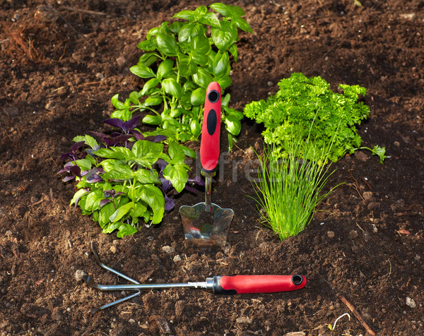 Petrezselyem kerti eszközök kert bazsalikom tavasz étel Stock fotó © Kurhan
