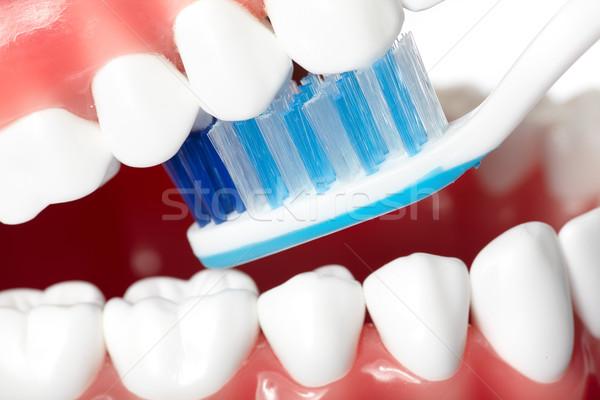 Zęby zdrowych ludzi zębów szczotki stomatologia Zdjęcia stock © Kurhan