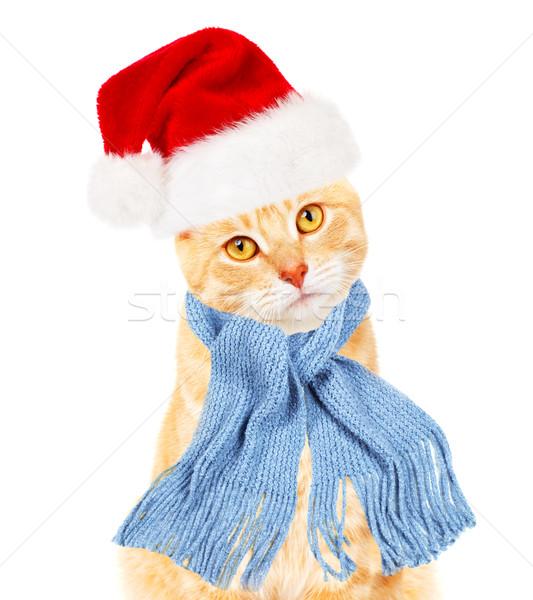 Ginger santa cat. Stock photo © Kurhan