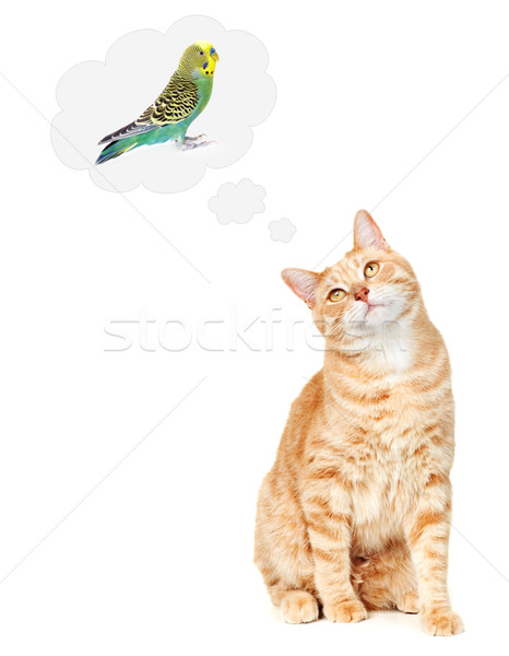 Cat thinking about bird. Stock photo © Kurhan