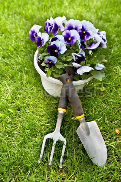 Flowers and gardening tools. Stock photo © Kurhan