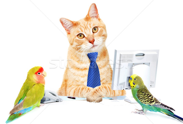 Cat and birds. Stock photo © Kurhan
