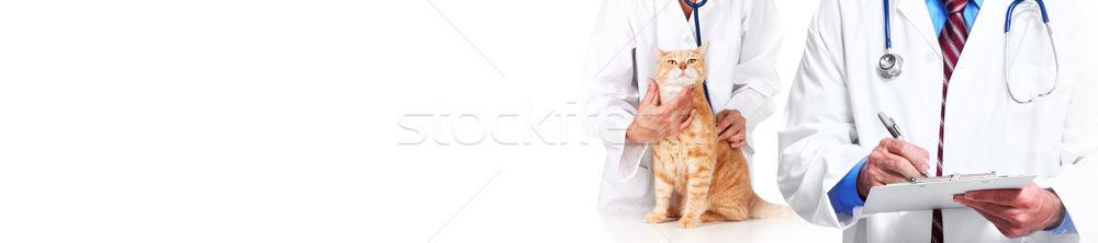 Kot lekarz weterynarii lekarza weterynaryjny lekarz stetoskop Zdjęcia stock © Kurhan