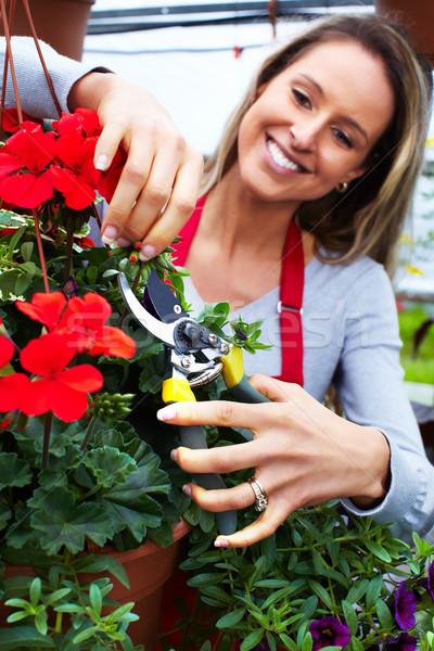 женщину цветок люди, работающие питомник садоводства Сток-фото © Kurhan