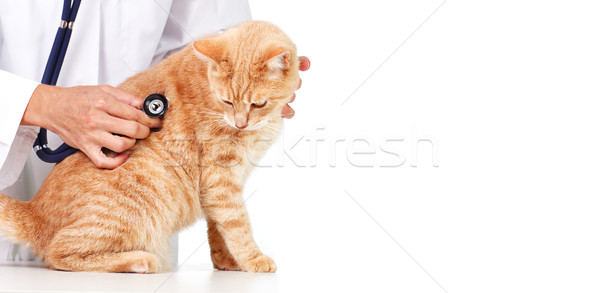 Red cat with veterinarian doctor. Stock photo © Kurhan