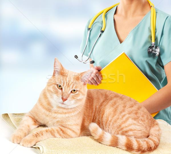 Foto stock: Gengibre · gato · veterinário · clínica · veterinário · médico