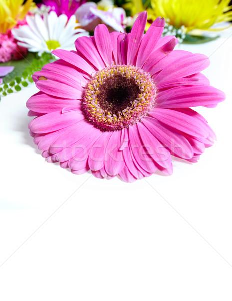 Floral cartão belo flores isolado branco Foto stock © Kurhan