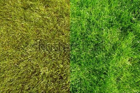 Green grass. Stock photo © Kurhan