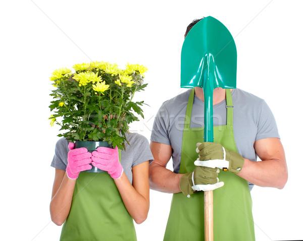 Stok fotoğraf: Bahçıvanlık · insanlar · işçiler · çiçekler · yalıtılmış · beyaz