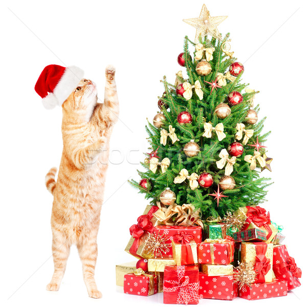 Ginger santa cat and Christmas tree. Stock photo © Kurhan