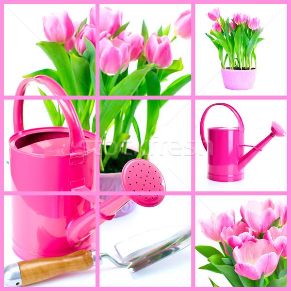 Ogrodnictwo tulipan kwiaty konewka odizolowany biały Zdjęcia stock © Kurhan
