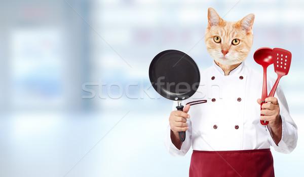 Cat chef. Stock photo © Kurhan
