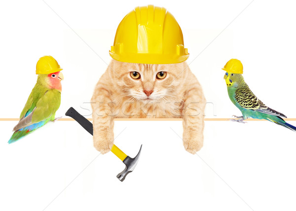 Cat with hammer and birds. Stock photo © Kurhan