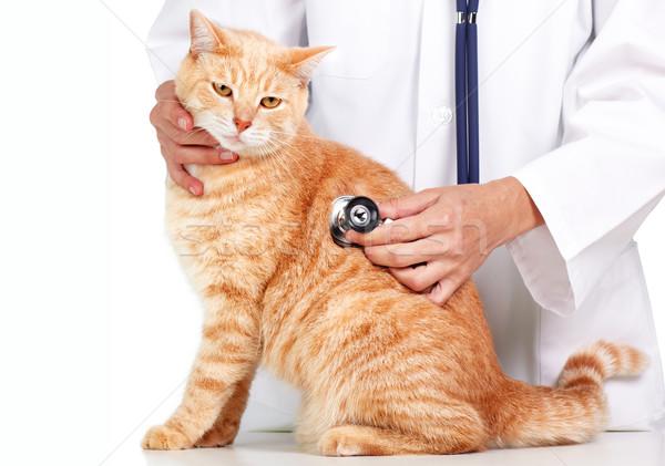 Foto stock: Vermelho · gato · veterinário · médico · veterinário · clínica