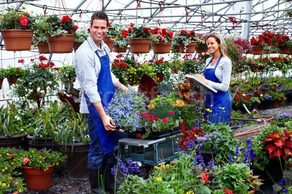 Kwiaciarz pracy kwiaty szklarnia ogrodnictwo ludzi Zdjęcia stock © Kurhan
