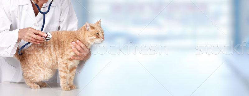 Foto stock: Gengibre · gato · veterinário · médico · vermelho · veterinário