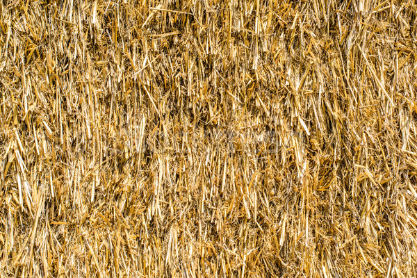 Straw texture, close up of straw background Stock photo © kurkalukas