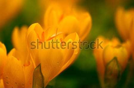 Geel regen druppels namiddag ondiep Stockfoto © Kuzeytac
