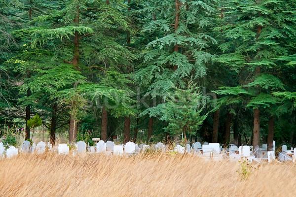 Foto stock: Solitário · cemitério · pinho · árvores · turco · campo