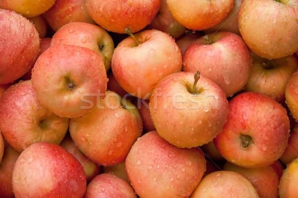 Vers organisch Rood appels hoop rijp Stockfoto © Kuzeytac