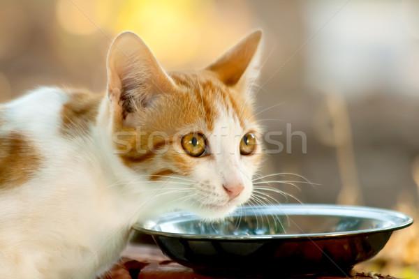 Zdjęcia stock: Głodny · kotek · spodek · pełny · mleka · żywności