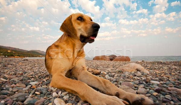 Cão praia céu água natureza Foto stock © Kuzeytac