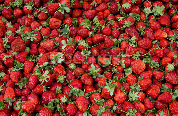 Stock photo: Fresh Organic Ripe Strawberrys