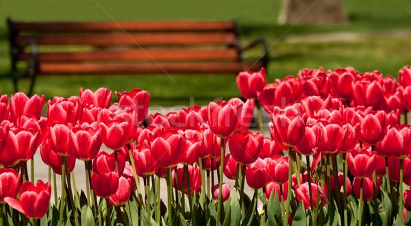 банка цветы цветок весны древесины лист Сток-фото © Kuzeytac