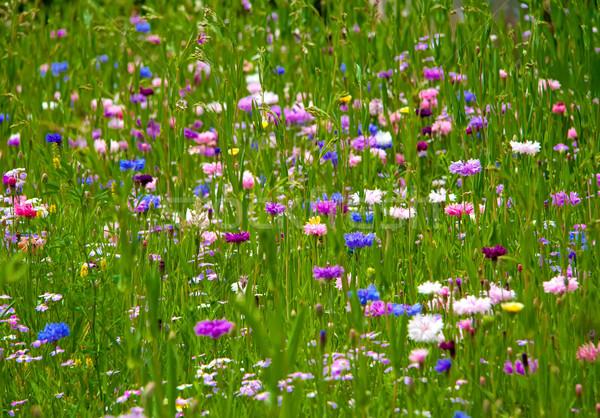 Field Of Flowers Stock photo © Kuzeytac